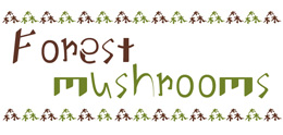 Forest mushrooms(iHerb Recommended blog)